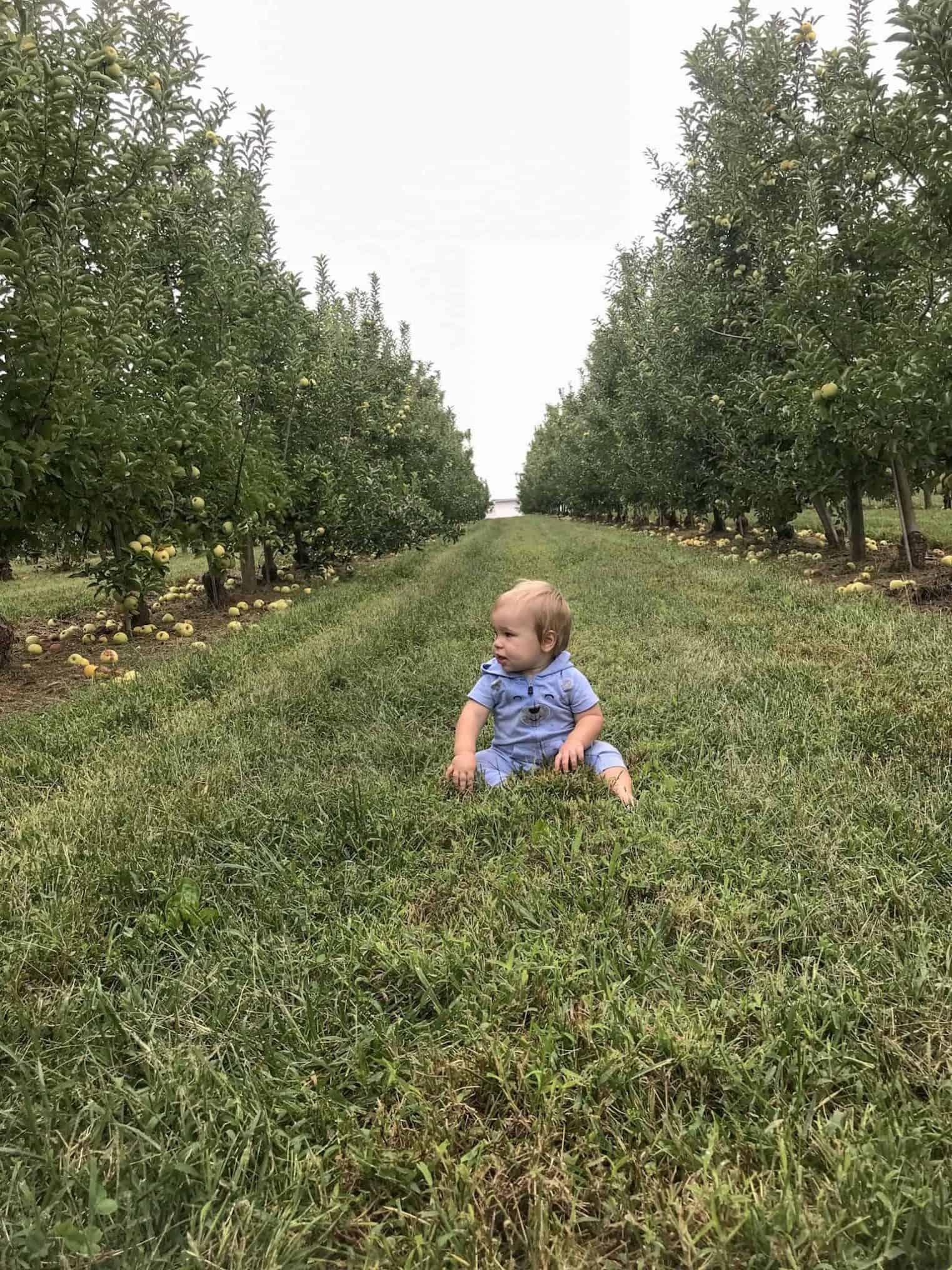 Picking apples at Eckert's farm in Belleville, IL